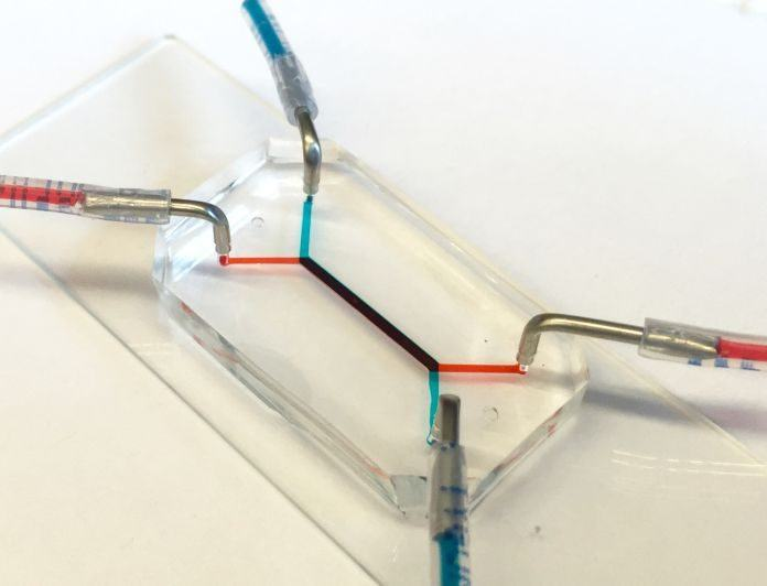 Researchers Develop Placenta-on-a-chip