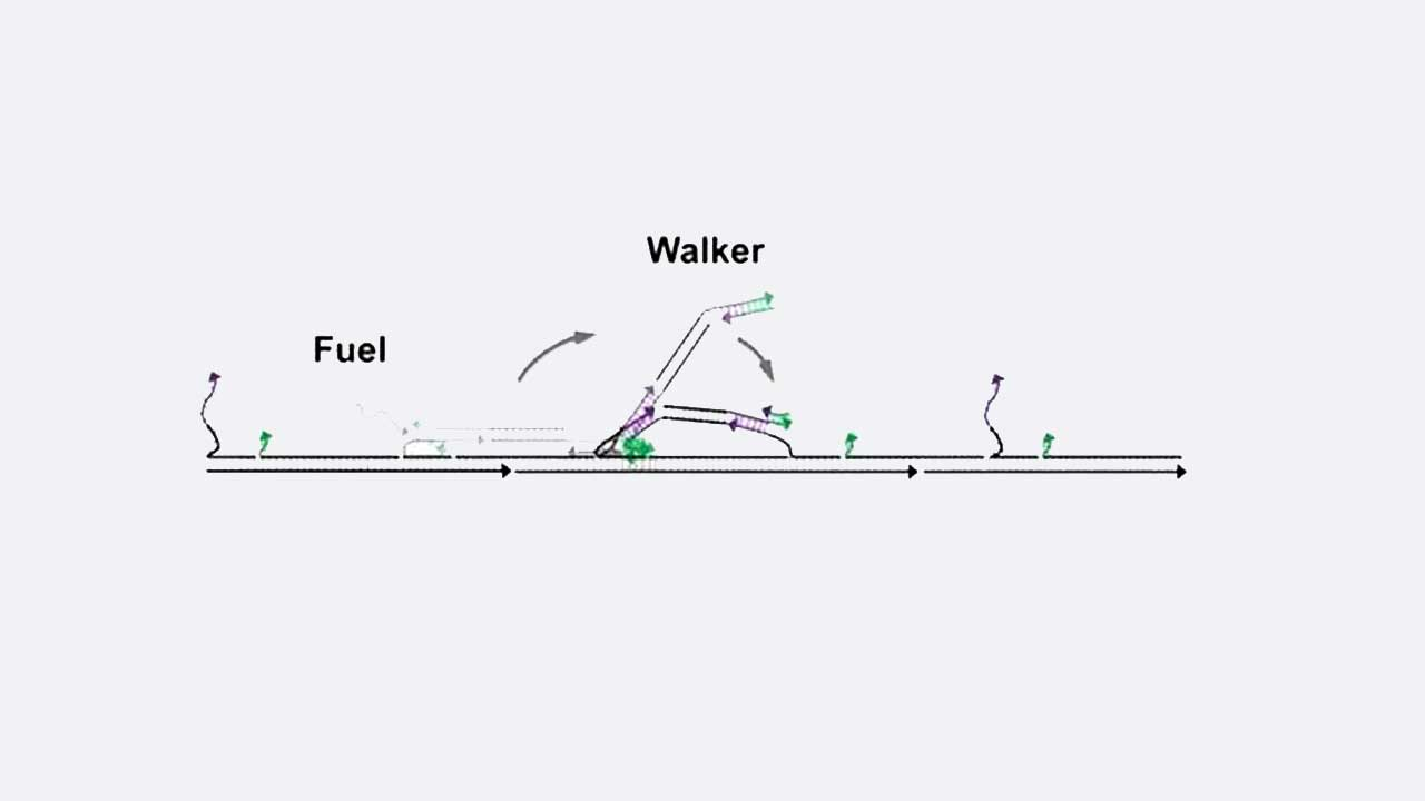 Tiny DNA Nano Walker Walk with Record Fuel Efficiency