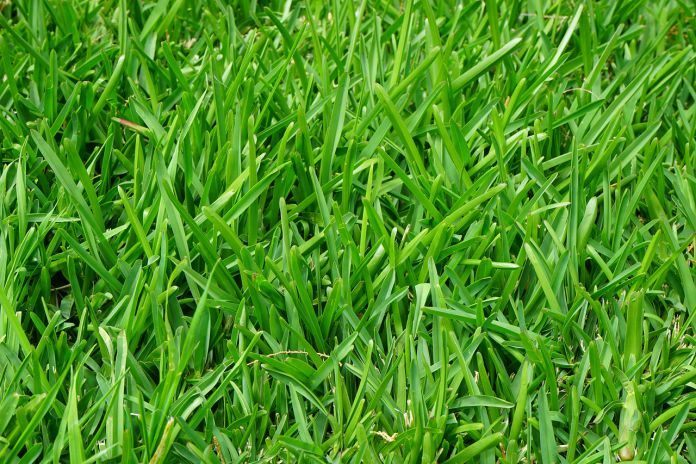 New Technique of Deriving Hydrogen from Grass Using Just Sunlight and a Cheap Catalyst