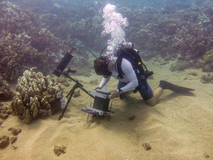 New Underwater Microscope to Analyse the Underwater World