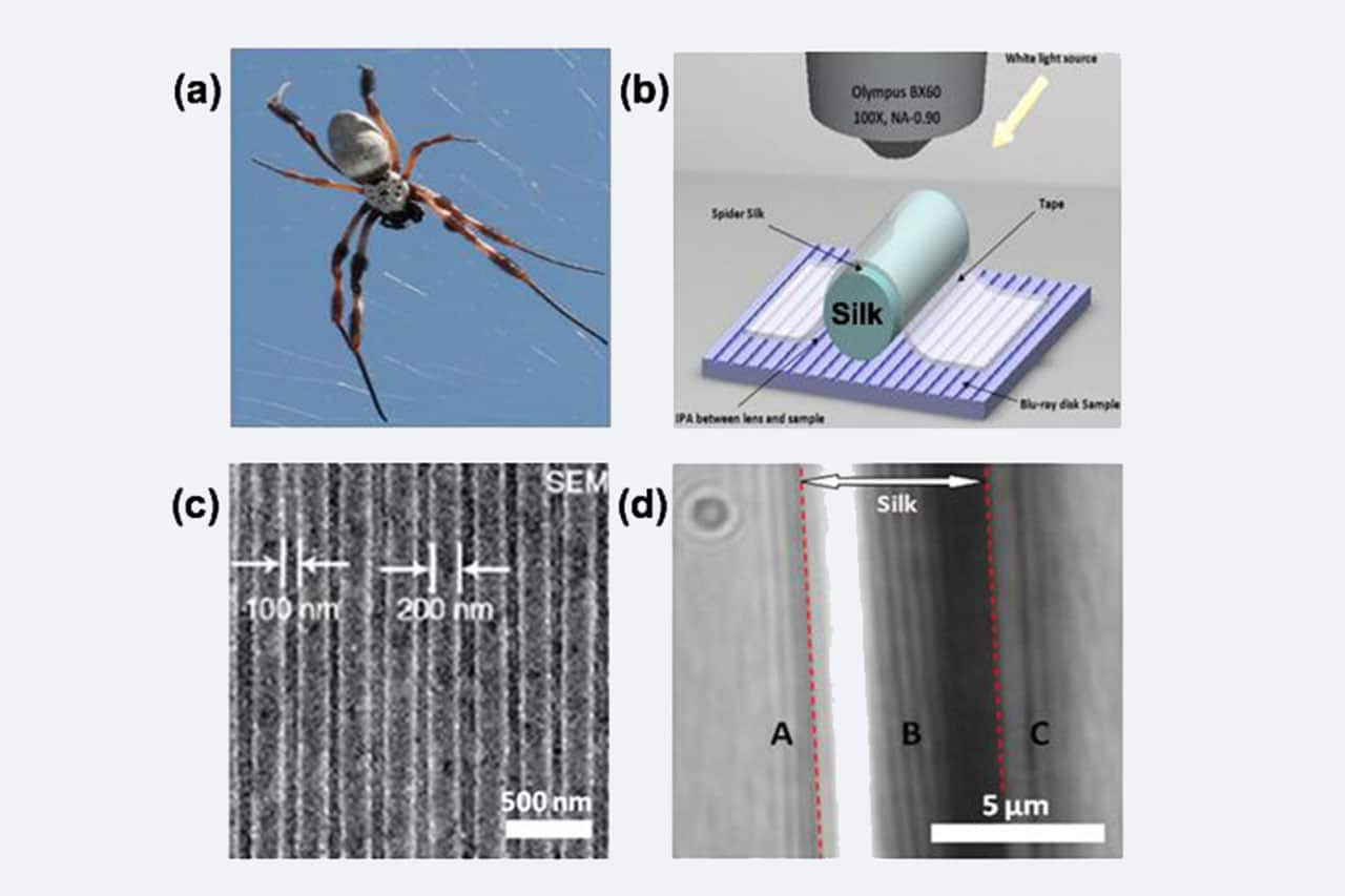 Spider Silk: Mother Nature's Bio-Superlens