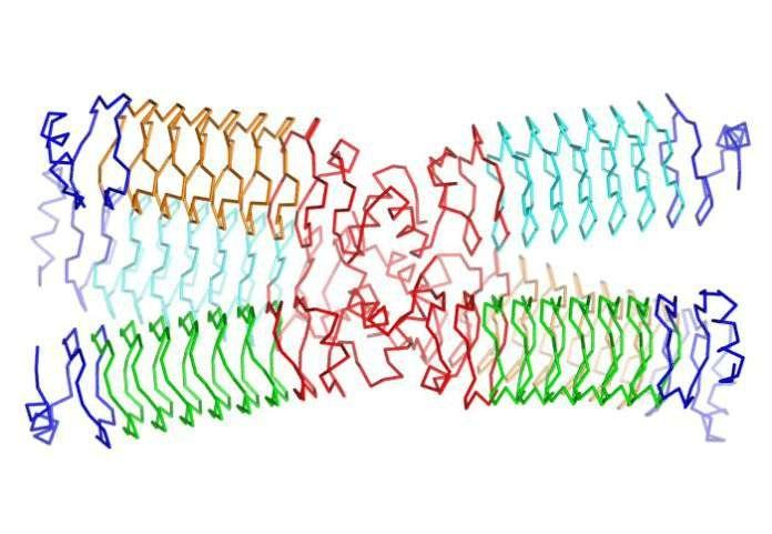 New Way to Create Synthetic Proteins