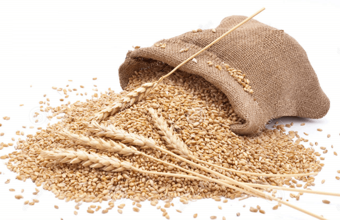 Wheat Proteins May Cause Inflammation Beyond The Gut