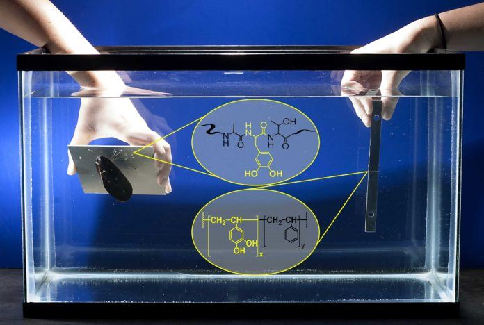 New biomimetic glue shows high-strength bonding under water