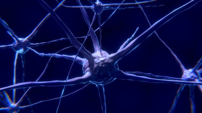 Scientists Have Discovered a Ultramodern Neuron