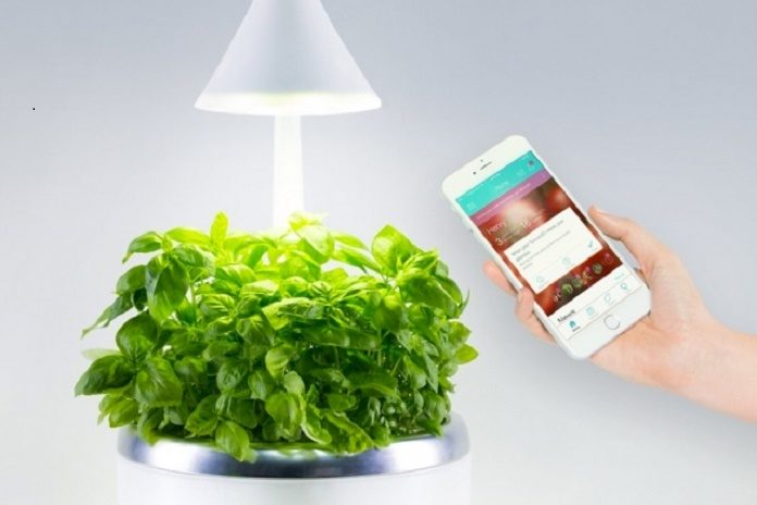 Scientists Have Created Smart, Soil-Free Microgarden