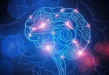 Algorithm Decrypts Brain-On-chip Signals