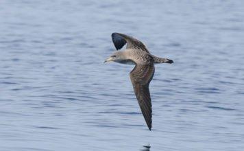 Sense of Smell is Key Factor in Bird Navigation