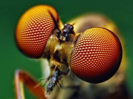 Insect Eyes Inspire New Solar Cell Design