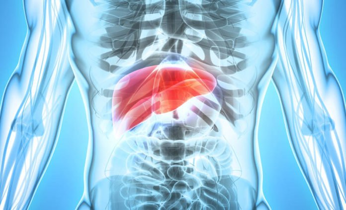 Bioengineered Transplantable Livers Mimic Natural Development