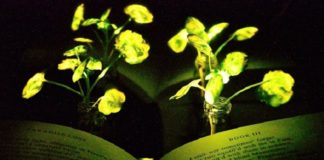 MIT Engineers Created Plants that Glow