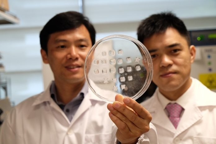 NR Banner - Prof Chen Peng (left) holding the drug-laden microneedle fat burning patch with Asst Prof Xu Chenjie