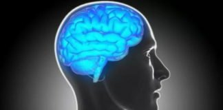 Mapping Brain Lesions for Clues to Criminal Behavior