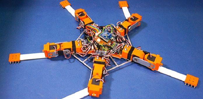 Brittle Stars inspire new generation robot