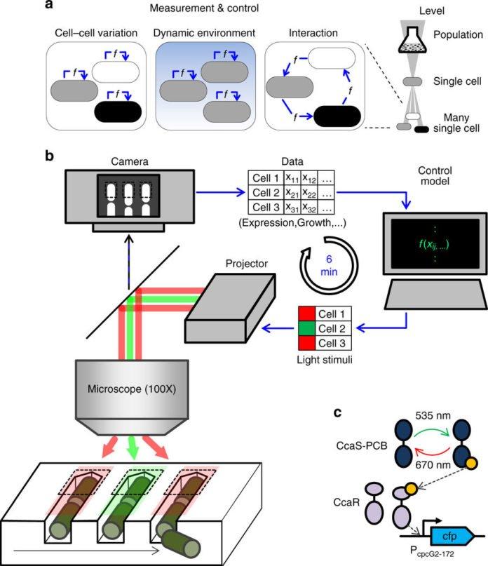 Virtual Reality for Individual Bacteria