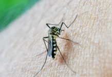 Researchers Reveal New Vaccine to Target Malaria