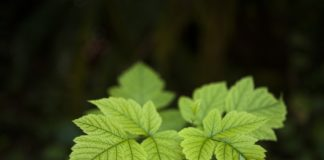 Scientists discovered a new regulator of vesicle trafficking in plants