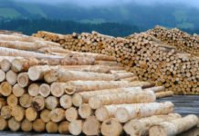 In cascade use, wood is used much more efficiently with a quota of 46 percent than in simple use.
