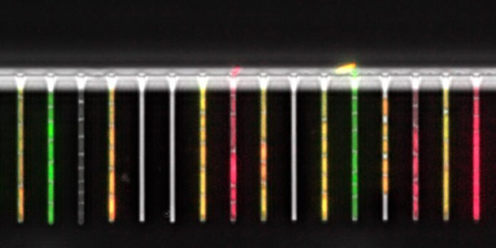 Tracking single bacterial cells with novel Lab-on-a-chip
