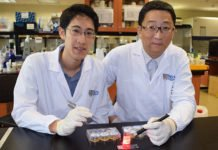 Scientists developed a wireless light switch for targeted cancer therapy