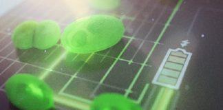 Harnessing the power of algae