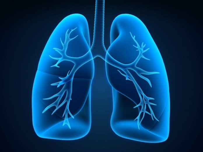 Researchers investigate the potential of lung restoration for transplant