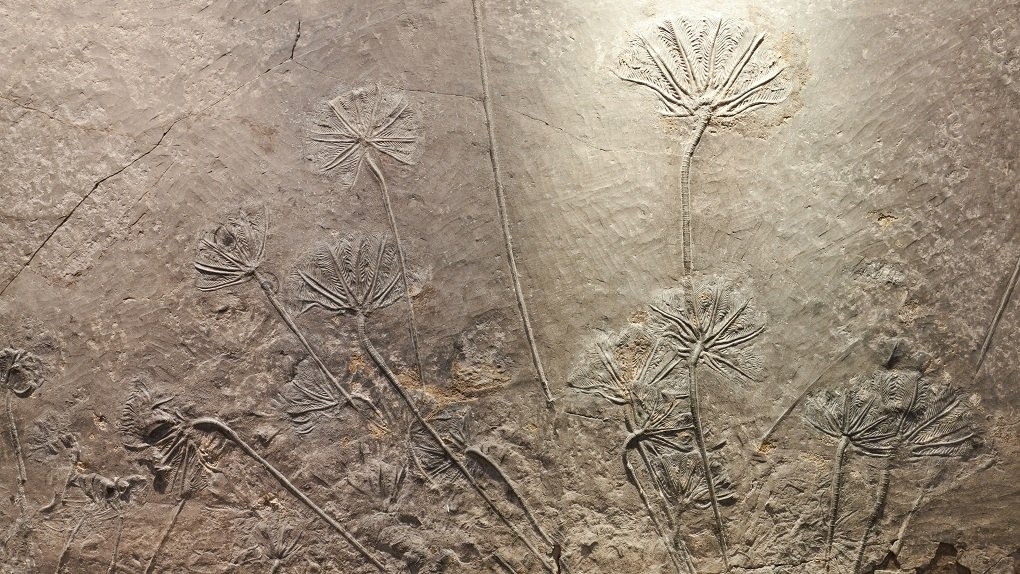 Plants Appeared on Land 100 Million Years Earlier Than Scientists Thought
