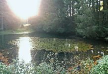Small pond in the forest: This is only accessible by land, but there are fish here