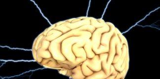 Brain, Energy, Thought, Anatomy
