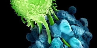 Molecules that could activate the immune system