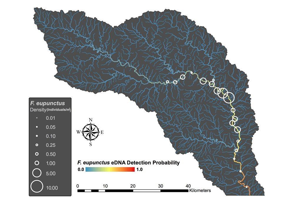 The researchers looked for the crayfish at numerous sites along the Eleven Point River in Southern Missouri.  Graphic courtesy Christopher Taylor