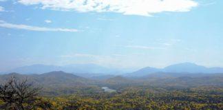Deforestation destroys more dry forest than climate change