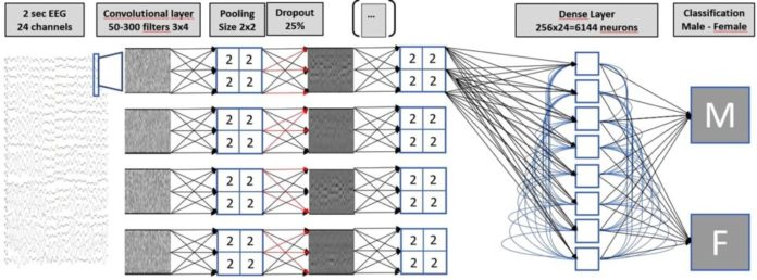 The multilayer neural net setup, used for classifying EEG readings