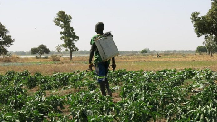 Identifying the risks of pesticide use in Burkina Faso