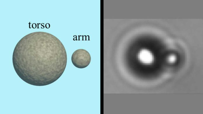 A one-torso, one-arm swimmer made of magnetically linked particles moves under the influence of an eccentric magnetic field. Rice University researchers believe it represents the simplest possible form of locomotion. Courtesy of the Biswal Lab