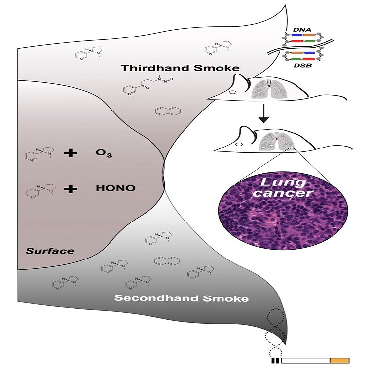 Thirdhand smoke contains the chemicals in secondhand smoke from a cigarette that are deposited on indoor surfaces. Some of these chemicals interact with molecules from the air to create a toxic mix that includes potentially cancer-causing compounds. These compounds induce double-stranded breaks (DSBs) in DNA, which if not repaired correctly, could lead to tumorigenesis in mice. In this study, the researchers have shown for the first time that thirdhand smoke exposure induces lung cancer in A/J mice in early life. (Credit: Antoine Snijders, Jian-Hua Mao, and Bo Hang/Berkeley Lab)