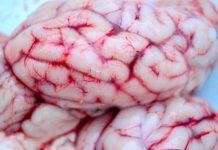brain, nerves