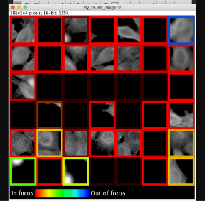 A pre-trained TensorFlow model rates focus quality for a montage of microscope image patches of cells in Fiji (ImageJ). Hue and lightness of the borders denote predicted focus quality and prediction uncertainty, respectively.