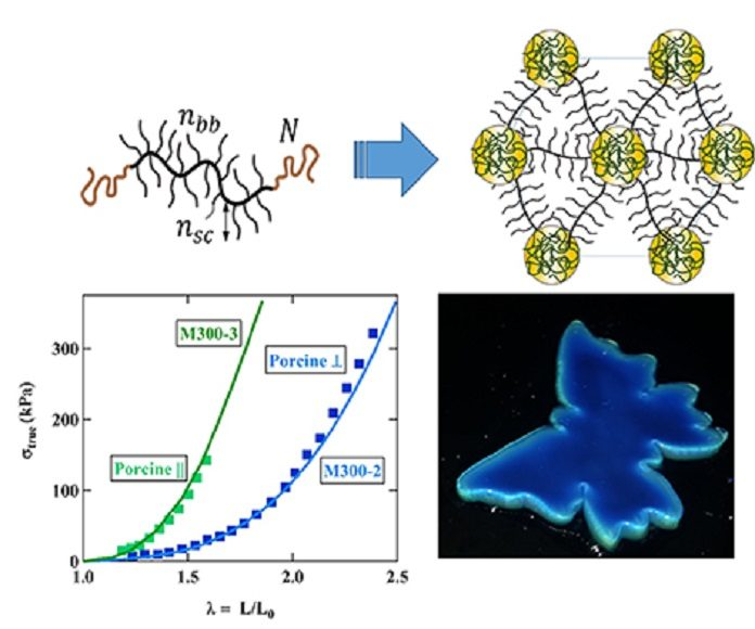 "© D.A. Ivanov and S.S. Sheiko Top – left: molecular structure of a plastomer synthesized in this work; right: supramolecular structure formed by the assembly of identical plastomers. Bottom – left: stress-strain curves for plastomers (""M300-2"" and ""M300-3"") that mimic the mechanical behavior of pig skin samples (""porcine"", in transversal or longitudinal cross-section); right: image showing the iridescent color of the plastomers. The edges are less blue because they receive the light at a different angle."