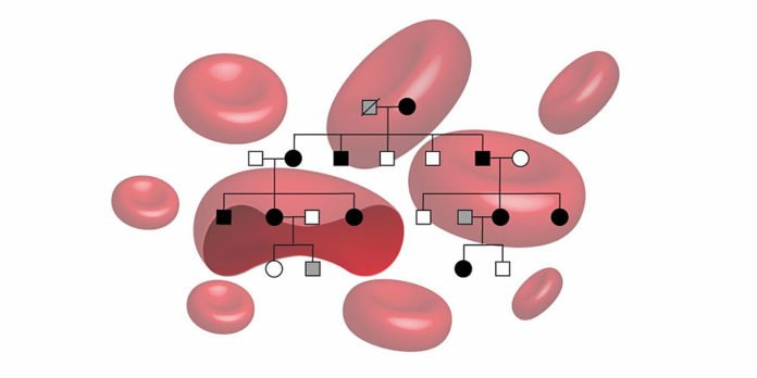 Inheritance of the familial erythrocytosis. (Image: University of Basel, Department of Biomedicine)