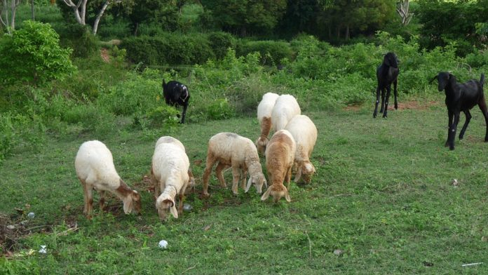 Similar targets, different solutions separate the sheep and goats, study