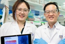 Professor Lim Chwee Teck (right) and PhD student Ms Lim Su Bin (left) from the Department of Biomedical Engineering at National University of Singapore developed a personalised risk assessment tool based on 29 novel genes to predict survival rate and treatment outcomes of early-stage lung cancer patients.