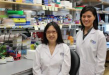 Assistant Professor Yvonne Tay (left), Principal Investigator at the Cancer Science Institute of Singapore at the National University of Singapore and Dr Chan Jia Jia (right), a Research Fellow in Asst Prof Tay's group uncovered new biomarkers and therapeutic targets for prostate cancer linked to the FTH1 iron storage gene.