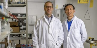 """Purdue University researchers Jean-Christophe """"Chris"""" Rochet and Dr. Riyi Shi say their discovery of a key factor in the development of Parkinson's disease could lead to new therapies, potentially including drugs currently on the market; it could facilitate earlier diagnosis and prevention of the neurological disorder. (Purdue University photo/Alex Kumar)"""
