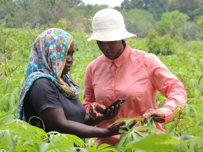A Tanzanian cassava farmer, left, learns to use a plant disease mobile app developed as part of the PlantVillage initiative led by Penn State researchers. Image: Penn State