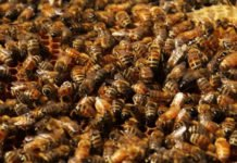Scientists create microparticles that could help save honey bees