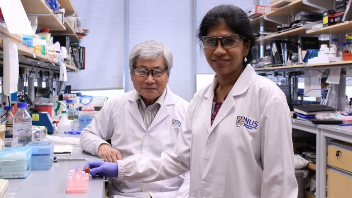 Professor Yoshikai Ito (left) and Dr Vaidehi Krishnan (right) were behind the study which identified that the tumour suppressor gene, RUNX3, acts as a barrier against oxidative stress in cancer cells.