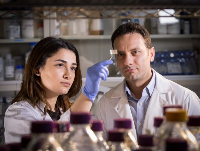 Researchers Hanie Yousefi and Thid Didar examine a transparent patch, which can be used in packaging to detect pathogens on food.