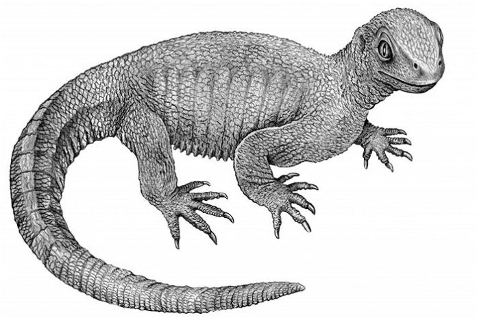 Study resolves the mystery of an enigmatic Triassic reptile