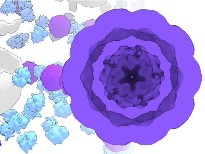 Modified Cryo-EM image of genetically expressed molecular workshops inside living cells. (Image: P. Erdmann / Max-Planck-Institute of Biochemistry)